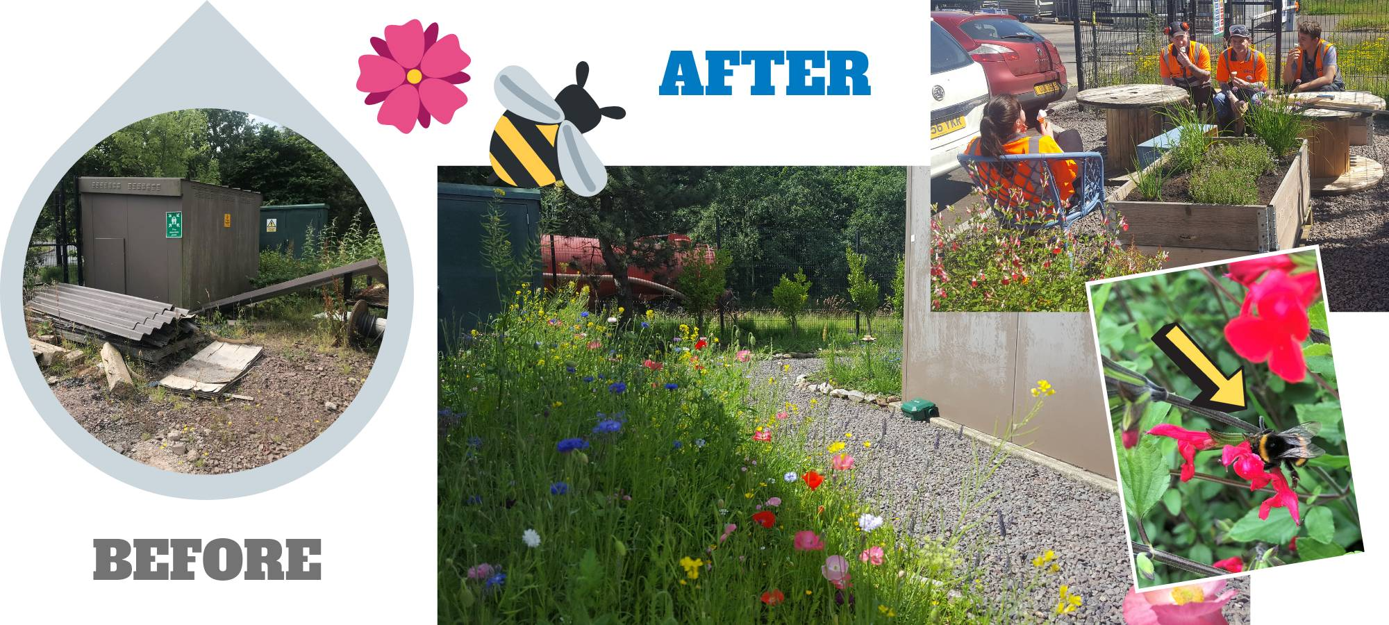 Supporting Biodiversity: Our Bee Garden